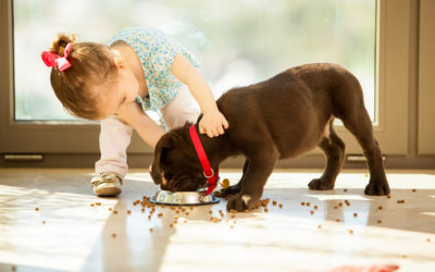 Is Pet Food a Food Allergy Risk?