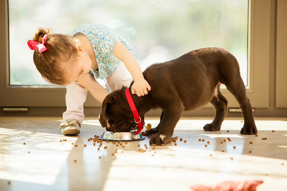 photo of toodler girl petting a dog who is eating it's food