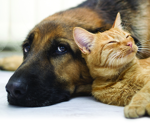 Photo of a dog and cat laying together