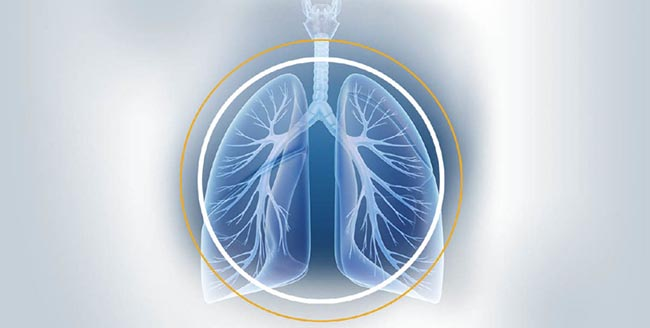 Image of lungs for study