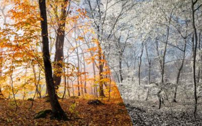 Hot Fall, Early Winter – The Forecast for Allergies & Asthma